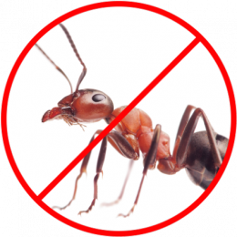 affordable Pest Control Franchise