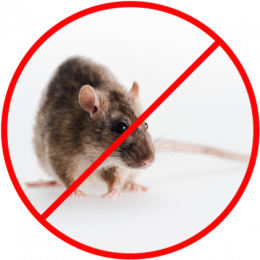 cheap Pest Control Franchise