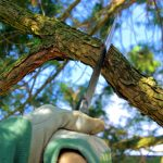 low cost Tree Surgeon Franchise
